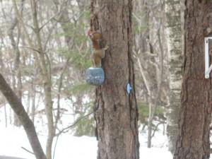 Smart Squirrel